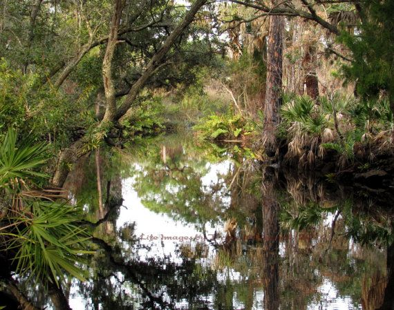 Old Florida's Beautiful Landscape with the by LifeImagesByTeresaMc, $25.00