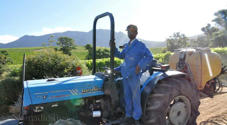 Taking pride in your work, Groot Constantia, Constantia wine farm, Cape Town, south Africa Fun Things To Do In Cape Town This Summer Nomadic Existence
