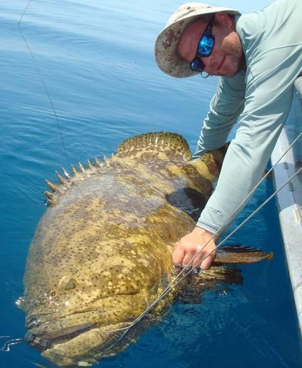 Sanibel offshore fishing charters wildlife tours deep for Deep sea fishing fort myers beach