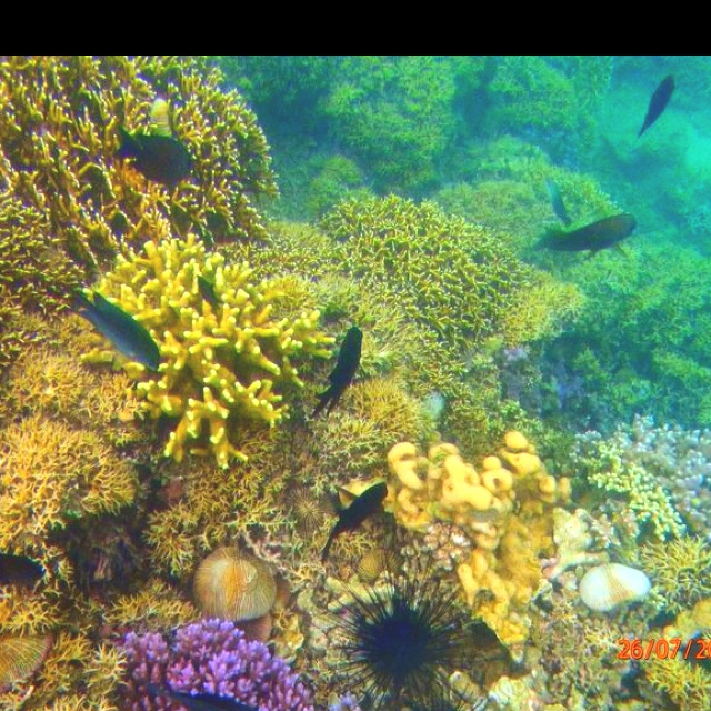Snorkeling in South China Sea--- Puerto Galero, Phillipines August '11