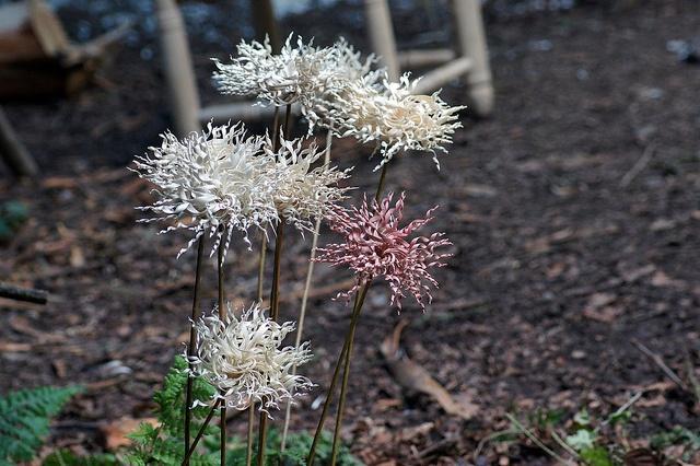 flowers from wood shavings