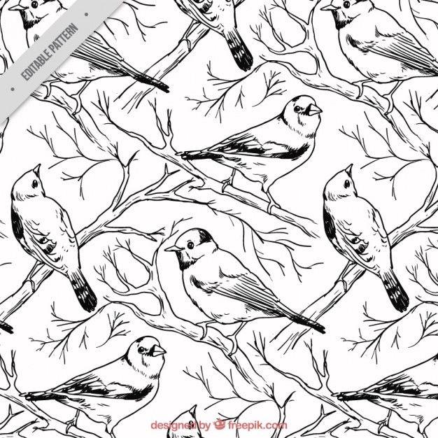Ручной обращается птицы рисунок Бесплатные векторы