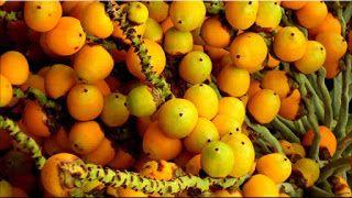 gambar buah pinang