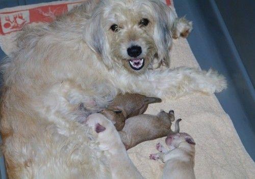 SIRA - Sauvetage d'animaux