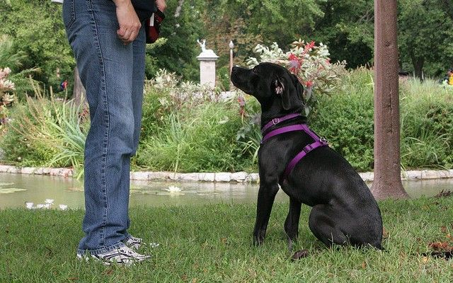 No More Pain: Best Alternatives to Dog Shock Collars - Top Dog Tips