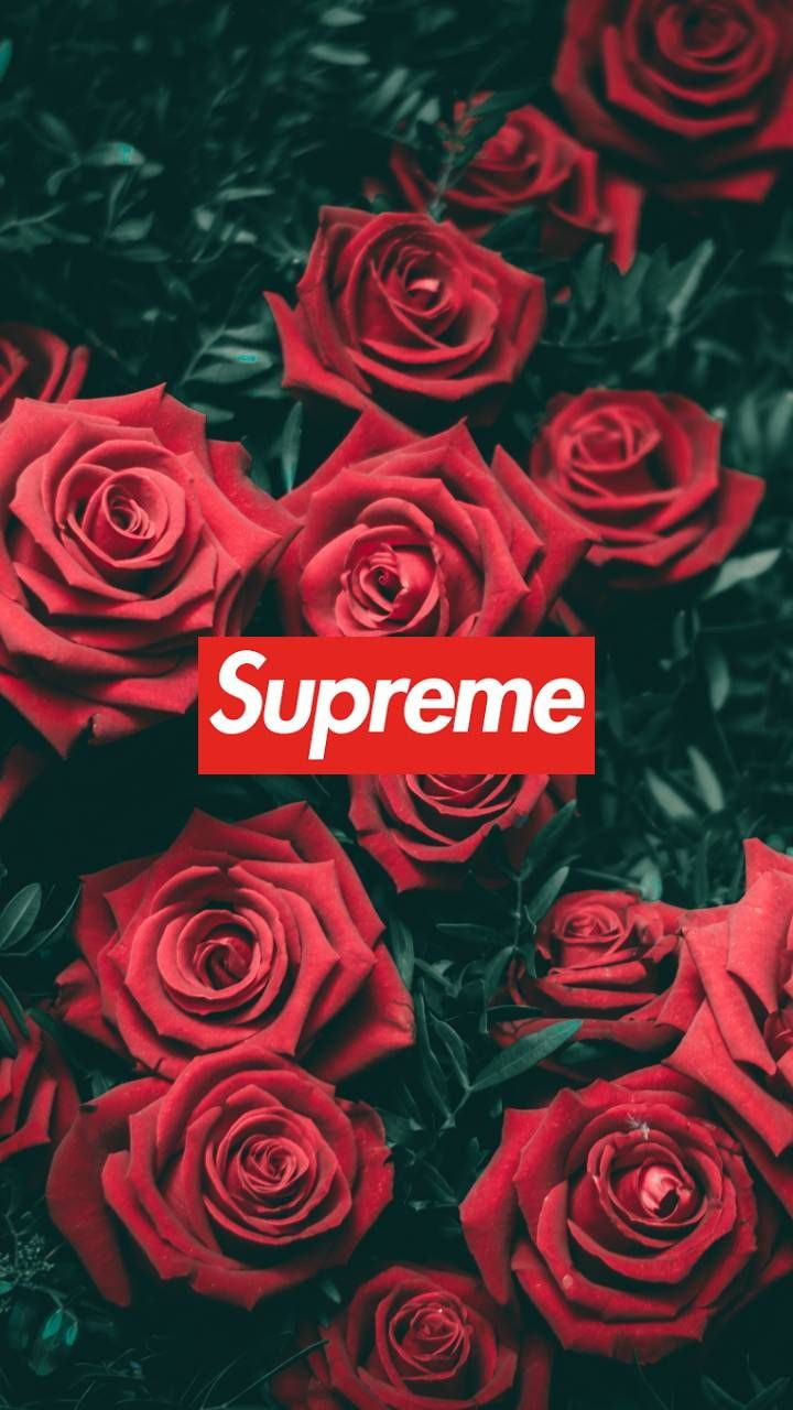 Supreme Floral Wallpaper Rose Wallpaper Supreme Wallpaper Harry Styles