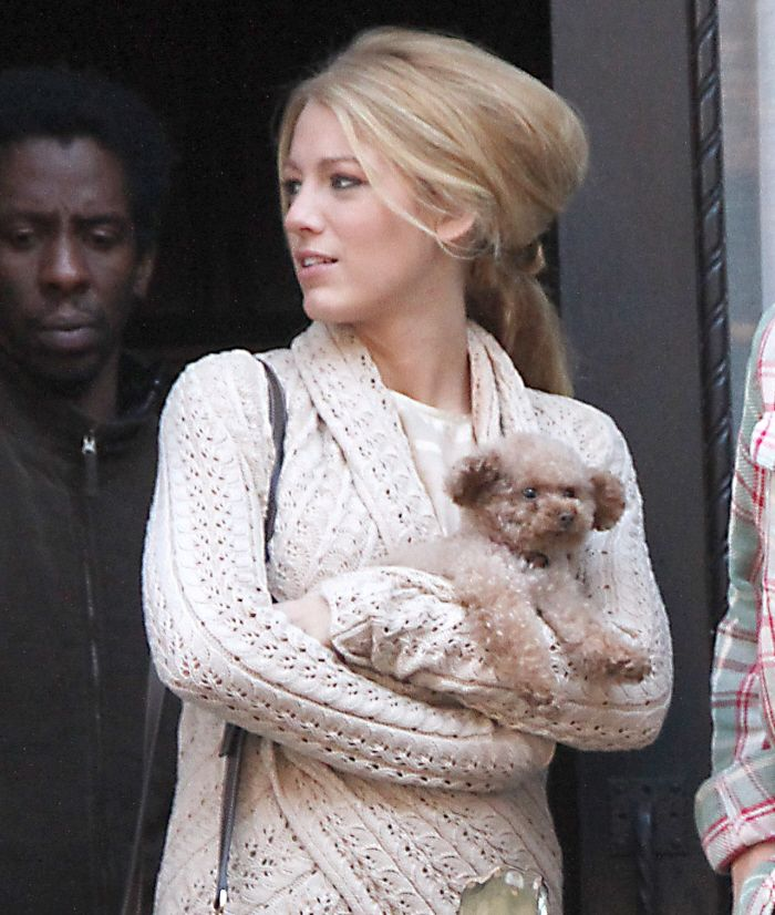 Blake Lively and her Maltipoo puppy named Penny