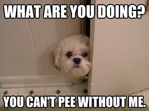 This is so my dog!! I haven't peed alone since 1993!