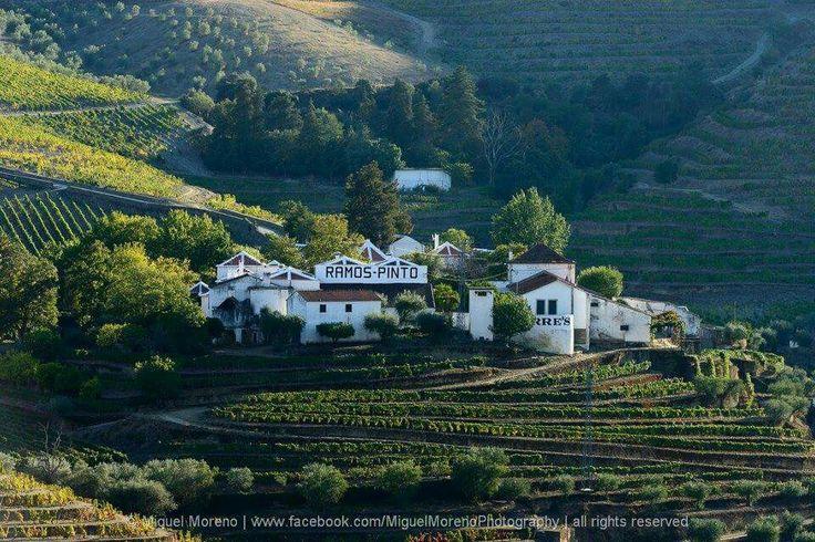 Quinta do Bom Retiro - Valença do Douro