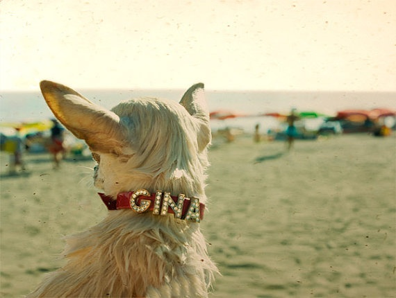 Venice Beach California 1996 Gina the Chihuahua   by TimIrving