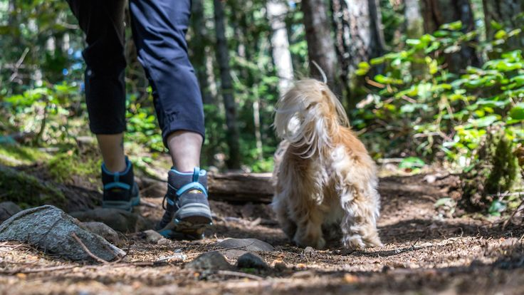 Ammonite Falls and hiking dogs