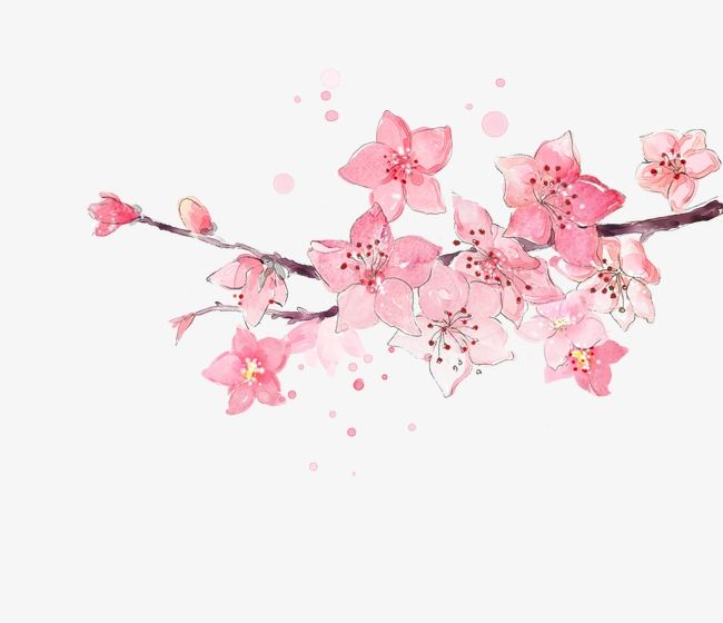 Watercolor Cherry Cherry Blossom Painting Watercolor Cherry Watercolor Flower Background Coolest red cherry blossom wallpaper