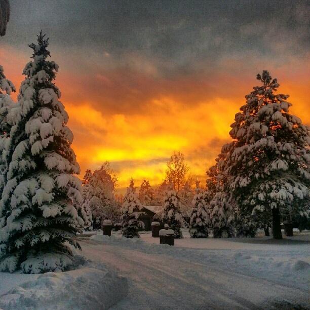 Yep it snows in AZ --- sooo pretty    Pinetop, Arizona