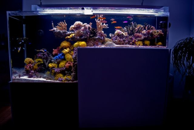 See more in the All Things Aquaria board: https://www.pinterest.com/JibinAbraham/all-things-aquaria/  Drop-off reef tank