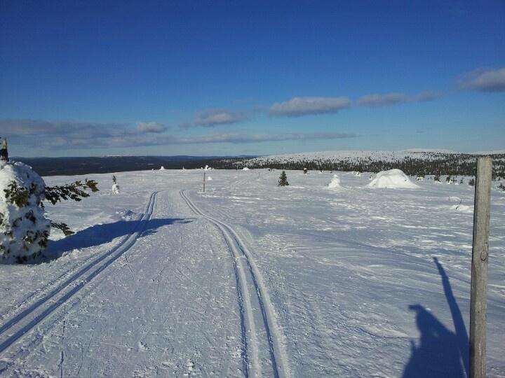 On top of Kukas Fell, Ylläs