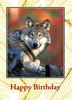 American Indian Wolf Birthday card. Happy Birthday with wolf Greeting Card