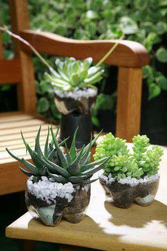 Plantas en culos de botella de plastico
