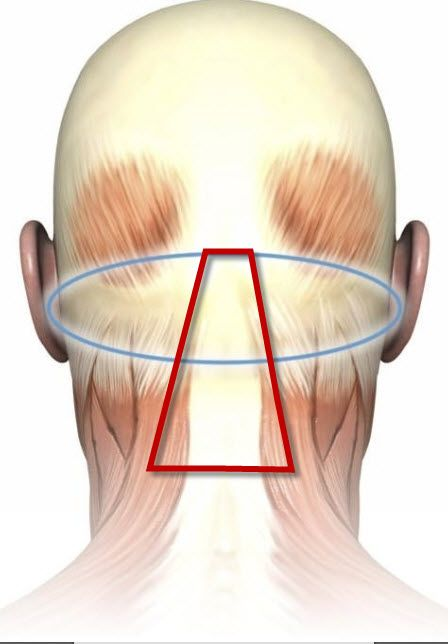 For tension headaches:  Apply doTERRA Past Tense (blend), Deep Blue (blend) or Peppermint (single oil) across the back of your hairline and down the middle of your neck. This region is called the sub-occipital triangle.  It allows pure plant essences (doTERRA essential oils) to penetrate straight into the brain and blood vessels that are along the spine. - Minnesota doTERRA