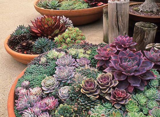 Dise o jardines suculentas dstudio jardiner a for Diseno de plantas ornamentales