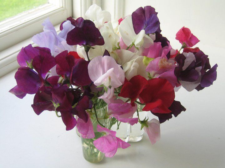one of my favourites:  Sweet peas