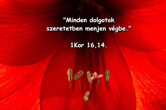 1 Kor 16,14