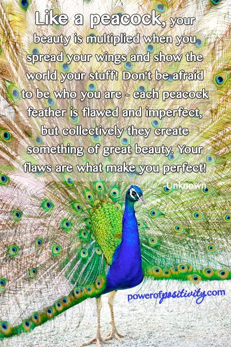 Like a peacock, your beauty is multiplied when you spread your wings and show the world your stuff! Don't be afraid to be who you are - each peacock feather is flawed and imperfect, but collectively they create something of great beauty. Your flaws are what make you perfect! ~Unknown