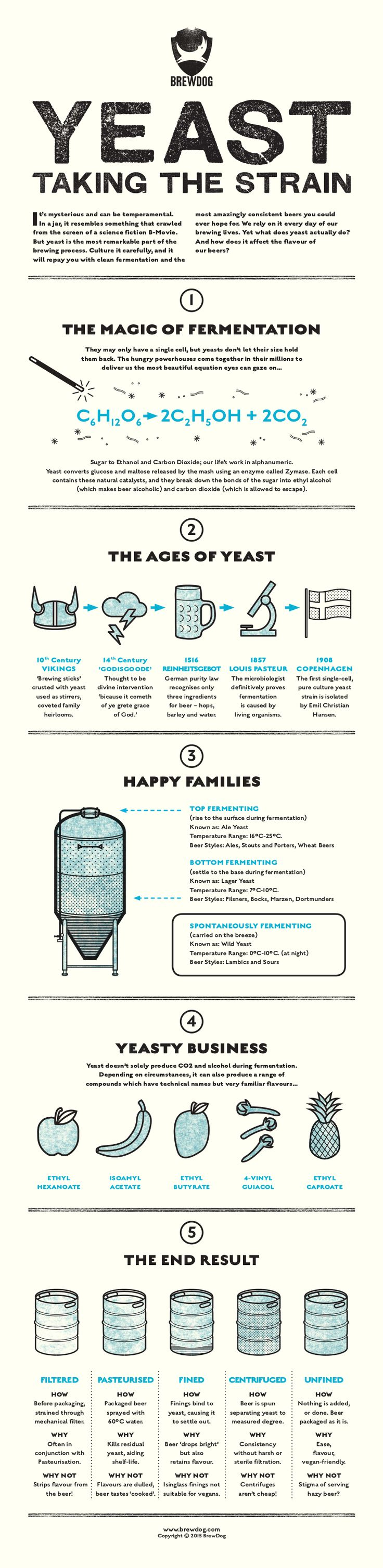 YEAST: TAKING THE STRAIN - BrewDog Beer Infographic