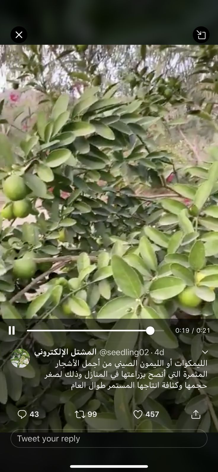 Pin By Maryam Alali On زراعه Plants