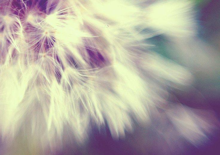 "Title: ""Light as air"". Dandelion"