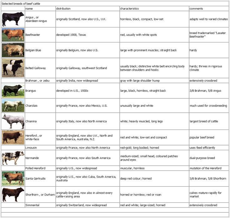 Beef Breeds Chart: Answer key, have students fill in the chart for Selected breeds of beef cattle. Need pictures? Check out http://genex.crinet.com/