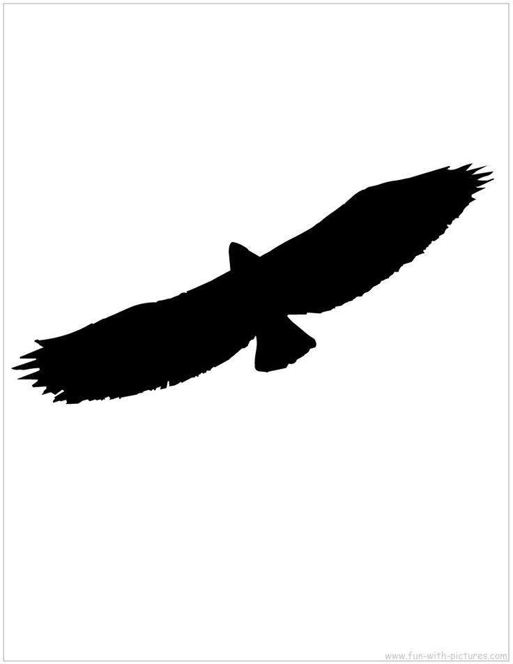 Flying Eagle Silhouette | National Forest VBS | Pinterest ...