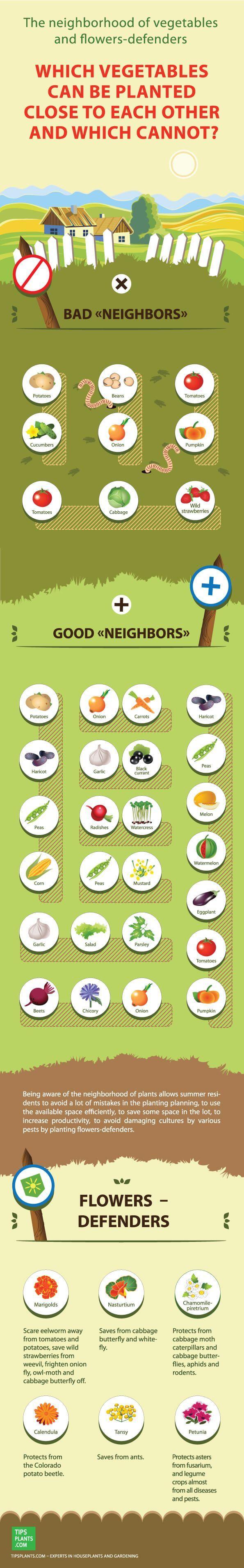http://test.de for more infos about cooking(Diy Garden Bed)
