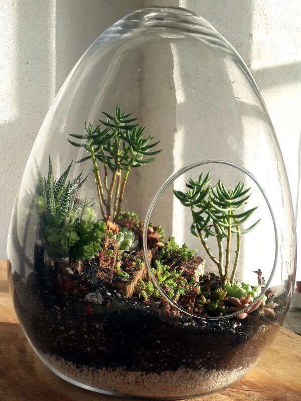 Rosyanochka Komnatnye Rasteniya Pinterest Terrarium Jar