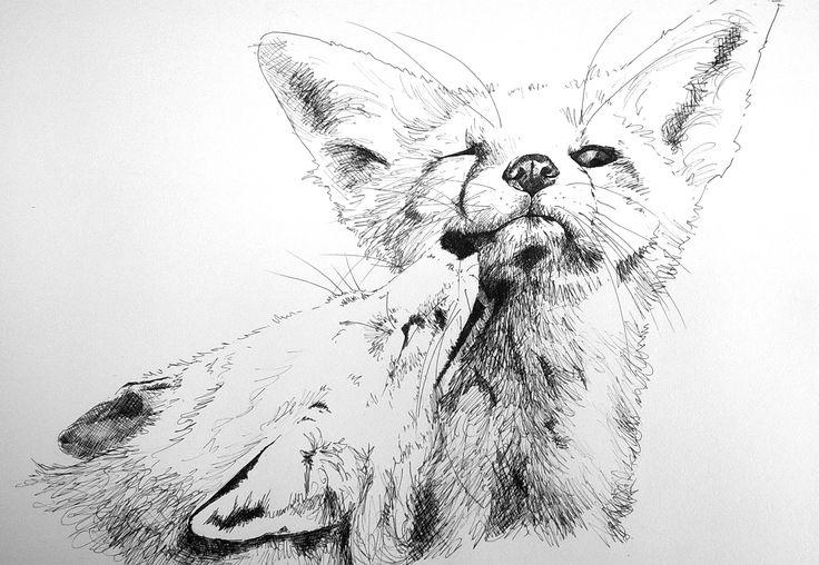 fox-1.jpg (Obraz JPEG, 2109×1456pikseli) - Skala (58%)