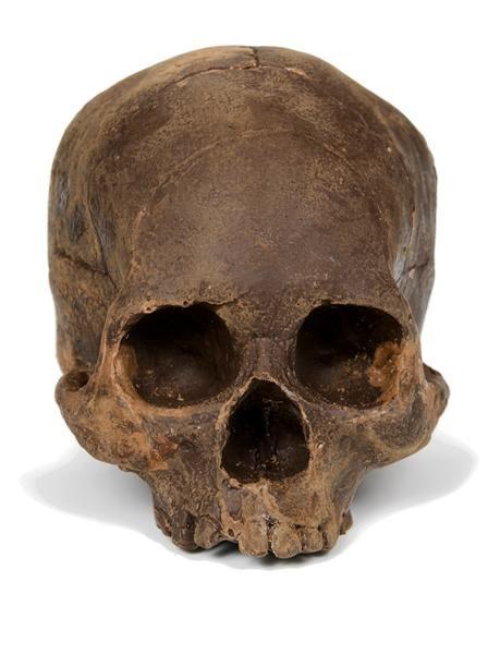 Edible solid dark chocolate skull. WOW.