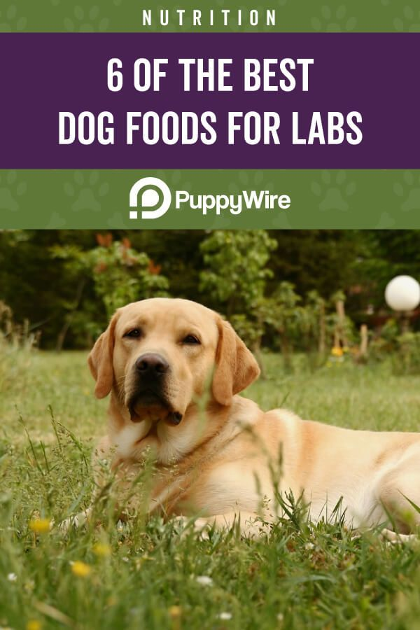 Best Dog Food For Labs Labrador Retrievers Top 6 Reviews