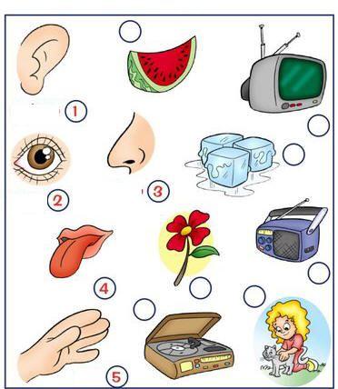 i cinque sensi immagini - Cerca con Google
