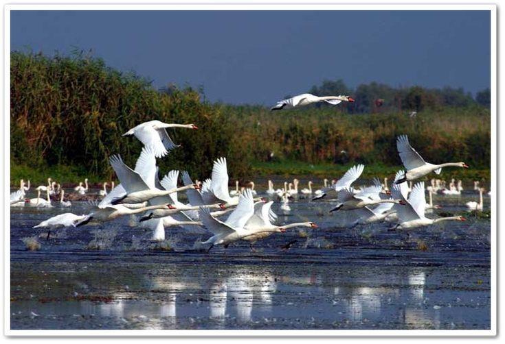The Last European Sanctuary: the Danube Delta