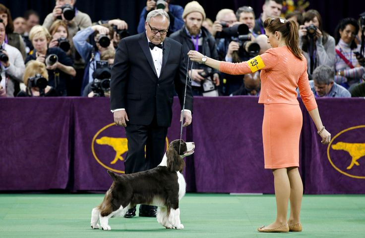 Best 25 Westminster Dog Show Ideas On Pinterest Dog Show Winner Scottish Terriers And