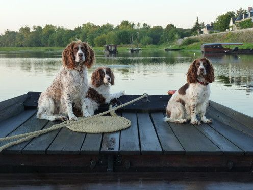 Dogs Welcome at http://www.lagrandemaison.net