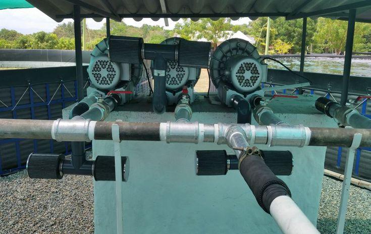 Paratebueno (Cundinamarca)  Es un proyecto de 6 piscinas de 12 metros de diámetro cada uno, se realizó con la instalación de todos los equipos necesarios, blowers americanos y se adaptó con el diseño de aireación u oxigenación propio.