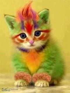 Punk Kitty: Cats, Kitten, Animals, Color, Quote, Funny, Rainbow, Kitty