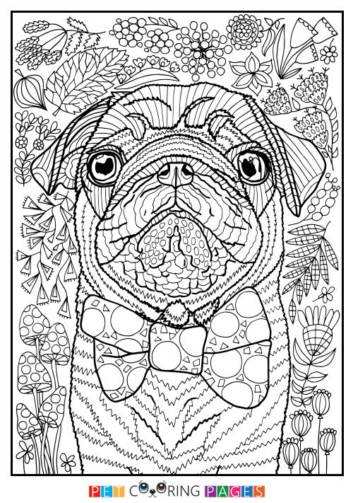 """Free printable Pug coloring page """"Sidney"""" available for ..."""