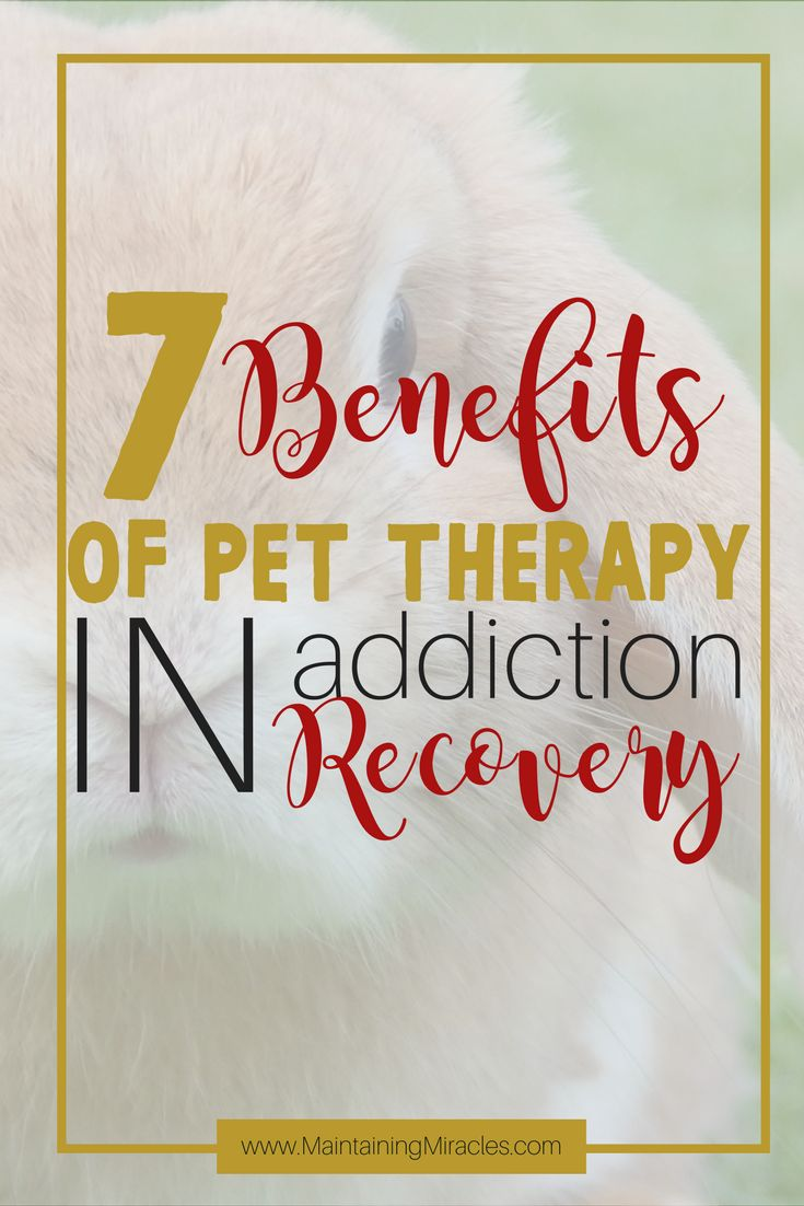 Pets help people in addiction recovery. The benefits of an animal companion for a recovering addict are numerous. Why don't you find out?