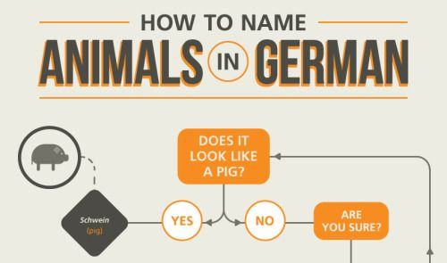Funny and bizarre German animal names The German language is famous for some really long nouns (Donaudampfschiffahrtsgesellschaftskapitän comes to mind). This is because German nouns, verbs, prepositions and adjectives are like lego bricks; you can stick them together in almost any way to create new words that encapsulate new concepts. This gives the language a special ability to name just about anything. You could call it the German language's lego brick-like quality, or Legosteineigensc...