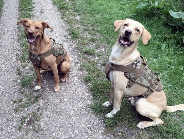 Top 15 Best Tactical Dog Harnesses Modular Molle Canine Vests