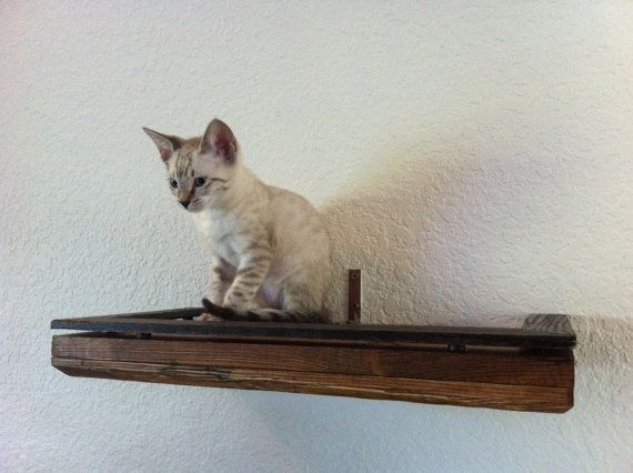 All types of cat perches! In love with this shop, and their beautiful cats!