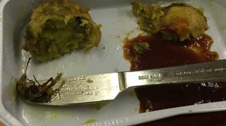Cockroach found in meal served on Air India flight probe on