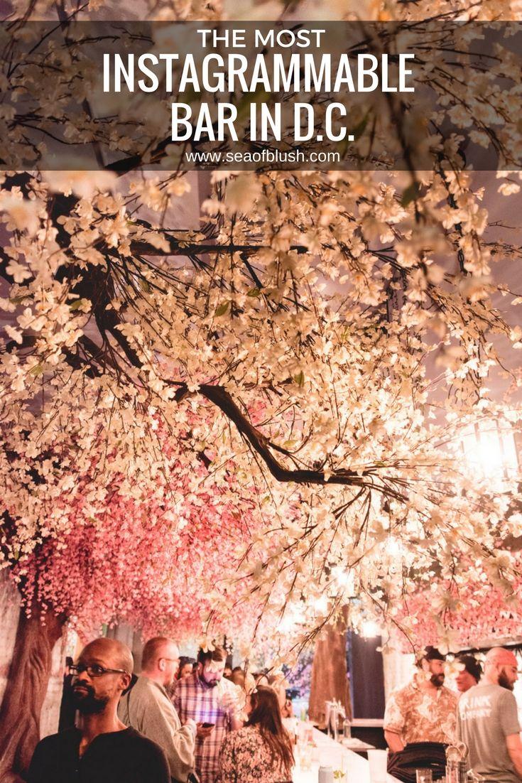 The 2021 Guide To Washington Dc Cherry Blossom Peak Bloom Cherry Blossom Dc Usa Travel Destinations Travel Usa