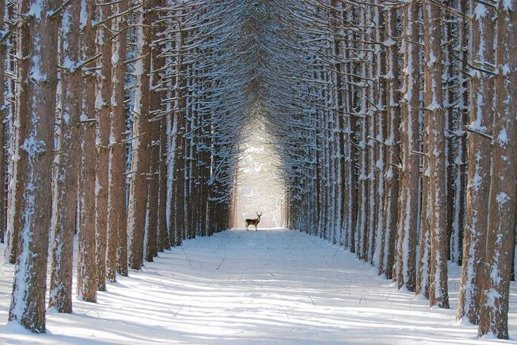 Quelques-unes des plus belles forêts du monde, pour un petit séjour au vert